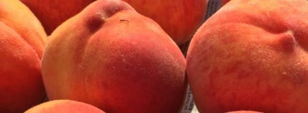 Varga Apricot Garden