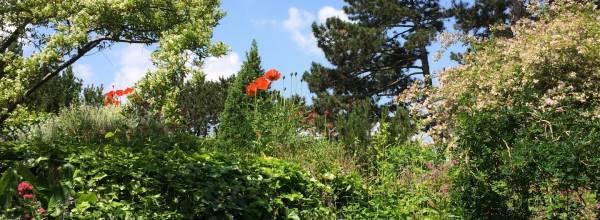 Japánkert | Japanese Garden (Japánkert)